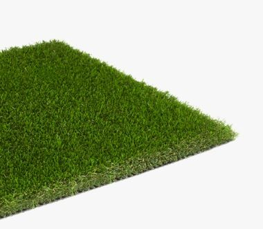 Evergreen 40