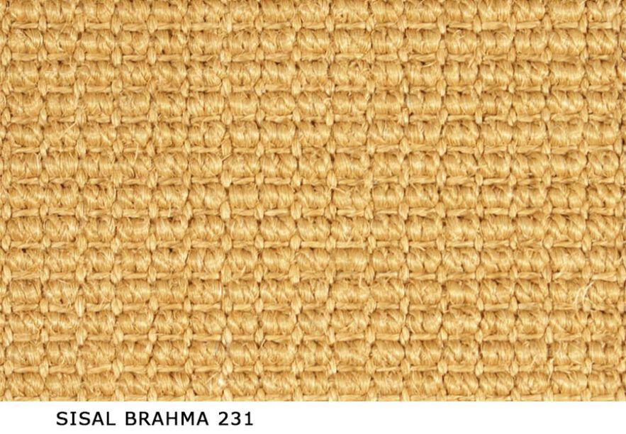 Sisal_Brahma_231