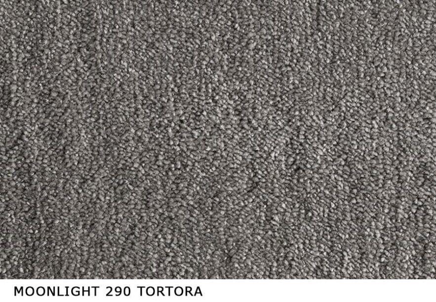 Moonlight_290_tortora